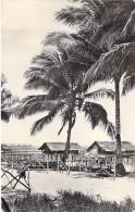 ARBRES Trees - PALMIERS  Palm Trees : Colonies Néerlandaises  / Nederlandse Kolonies - CPSM Photo PF -  Palmen Palme - Bäume