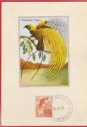Carte Maximum - Papouasie-Nouvelle-Guinée - Oiseau - Paradisier Papou - Port Moresby 1955 - Papouasie-Nouvelle-Guinée