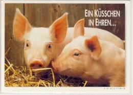 SCHWEIN; PIG - Feeling, Ein Küsschen In Ehren .... - Cochons