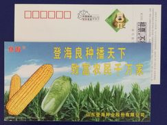 Corn Planting Field,Chinese Cabbage,CN 06 Denghai Improved Variety Seed Advert Pre-stamped Card,specimen Overprinted - Vegetables