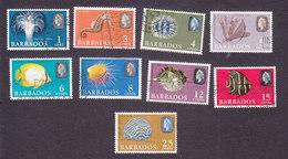 Barbados, Scott #267, 269-276, Used, Sea Life, Issued 1965 - Barbados (...-1966)