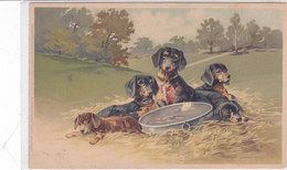 CARD CANE BASSOTTI BASSET DOG-SAUS SAGE-DOG   FP-N-2-0882-26676 - Chiens