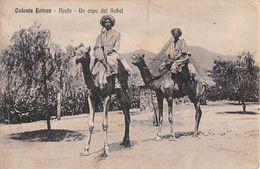 """06681 """"COLONIA ERITREA - NACFA - UN CAPO DEL SAHEL""""  ANIMATA, CAMMELLI, FOTO G. COSSIO. CART SPED 1915 - Eritrea"""