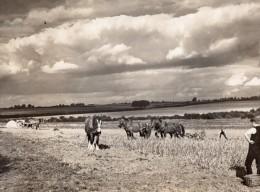 Royaume Uni Campagne Anglaise Travaux Des Champs Chevaux Ancienne Photo 1930 - Professions