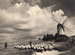 Royaume Uni Berger Et Moutons Moulin A Vent Campagne Anglaise Nuages Ancienne Photo 1930 - Professions