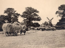 Campagne Anglaise Travaux Des Champs Cheval Moulin A Vent Ancienne Photo 1930 - Professions