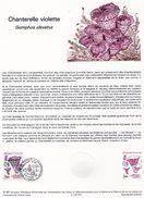Document De La Poste - Histoire Du Timbre Poste - Chanterelle Violette Gomphus Clavatus - 5 Septembre 1987 - - Documentos Del Correo