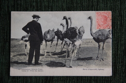 AUSTRALIE - OSTRICH FARM - Australia
