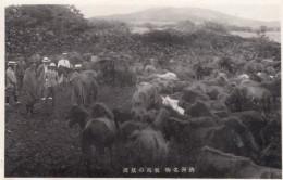 Korea Horse Ranch Japan Occupation Colony Era, C1930s Vintage Japanese Postcard - Corée Du Sud
