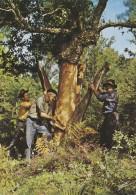 Métiers - Forêt - Récolte Chêne Liège - Landes 40 - 1967 Cachet Saint Vincent De Tyrosse - Métiers