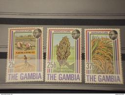 GAMBIA - 1973 PIANTE   3 VALORI  - NUOVI(++) - Gambia (1965-...)