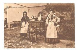 Laitières Flamandes - Hondenkar / Attelage De Chien / Dog Cart / Hundewagen - éd. Star - Unclassified