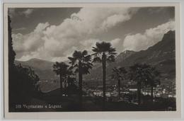 Vegetazione A Lugano - TI Tessin