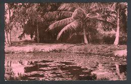 Paysage Africain - Palmiers - Carte Africaine N° 148 - Dahomey