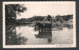 Les Buffles Tirant La Herse - Postcards