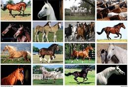16 Postcards Of  Horse Horses,  Postkarte Cart - Chevaux