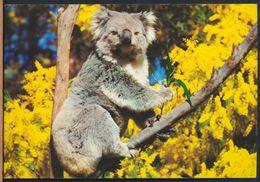 °°° 8687 - AUSTRALIA - KOALA - With Stamps °°° - Australia