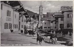 AK Mittenwald A. Isar - Obermarkt - Kühe (30882) - Mittenwald
