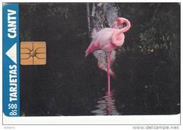 VENEZUELA - Flamingo, 10/94, Used - Uccelli