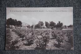 Saint Bauzille De La Silve - Notre Dame Du Dimanche., Vue Générale Du Domaine De L'Apparition - France