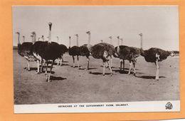 Shambat Sudan 1910 Postcard - Soudan