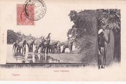 CEYLON - Elephants - 1904 - Sri Lanka (Ceylon)