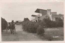 LA SENIA - L'Hippodrome Du Figuier - Autres