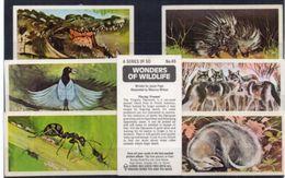 Brooke Bond Tea - Wonders Of Wildlife  - 7 Images Dont N° 45 En Double - N° 30, 31, 41, 43, 44, 45  (100489) - Tea & Coffee Manufacturers