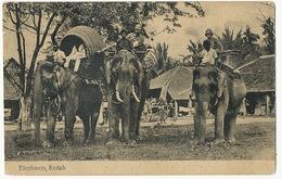 Elephants Kedah Used From Penang 1910 - Malaysia