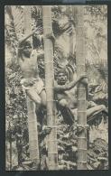Ceylan -  - Copyright By Platé Ltd, Colombo N° 68 - Tree Climbers ( Manque Sur Un Bord ) Odi01 - Sri Lanka (Ceylon)