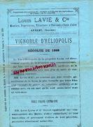 ALGERIE- RARE DOCUMENT LOUIS LAVIE & CIE -MINOTIER VITICULTEUR FABRICANT HUILE OLIVE 15 AVRIL 1889- VIGNOBLE HELIOPOLIS - Historical Documents