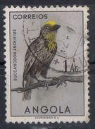 Angola 1951 - Barbetto Frontegialla Yellow-fronted Barbet - Angola