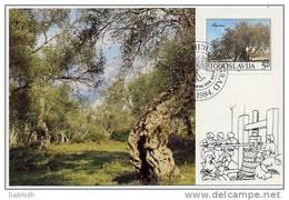 YUGOSLAVIA 1984 Old Olive Tree On Maximum Card.  Michel 2065 - Maximum Cards