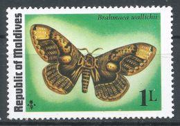 Maldive Islands1975. Scott #584 (MNH) Brahmaea Wallichii, Butterfly, Papillon - Maldives (1965-...)