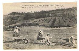 CPA 47 PENNE La Recolte De La Prune D'ente à Chalaret - Autres Communes