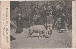 Egypte Rhinoceros In Giza Zoological Gardiens - Autres