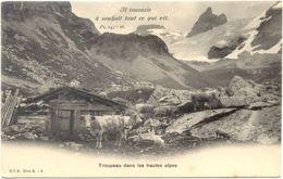 05 – DIVERS : Troupeau Dans Les Hautes Alpes – Il Rassasie à Souhait Tout Ce Qui Vit N° 3 - Non Classificati