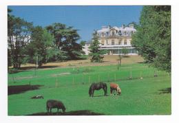 95 LE PARC Hôpital De Taverny N°4 Très Belle Vue Générale Du Parc Poneys Mouton - Taverny
