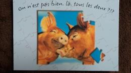 CPM COCHON SAUVAGE ON EST PAS BIEN LA TOUS LES 2  PHOTO FOTOSTOCK ANIMAL PUZZLE - Cochons