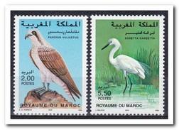 Marokko 1996, Postfris MNH, Birds - Marokko (1956-...)
