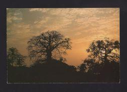GUINEA BISSAU GUINÉ BISSAU BIOMBO Sunset POSTCARD - Guinea-Bissau