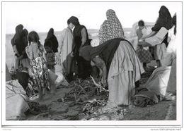Sahara Occidental : 1779/12 Camp Réfugiés Corvée De Bois Mai 76  (J'réfia Sahraouis Gonfreville 76) Photo Bloncourt - Sahara Occidental