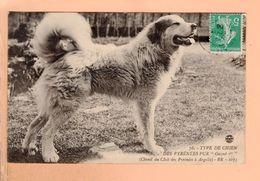 Cpa Carte Postale Ancienne   - Chien Des   Pyrenees Argeles 78 - Perros