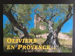 CARTE POSTALE PROVENCE/OLIVIERS EN PROVENCE - Provence-Alpes-Côte D'Azur