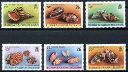 Turks And Caicos Islands, 1980, Shells, Molusses, MNH, Michel 490-495 - Turks & Caicos (I. Turques Et Caïques)