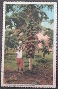 PAPAYA - TREE WITH FRUIT (PHILIPPINES) - 2A - H397  - VIAGGIATA ANNI '60 - FINITURA OPACA - FORMATO PICCOLO - (1680) - Filippine