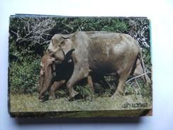 Sri Lanka Yala Park With Wild Elephants - Sri Lanka (Ceylon)