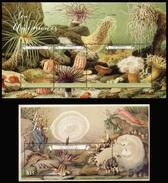 2017 Saint Vincent, Marine Fauna, Coral, Shells, S/sheet + Sheet, MNH - Marine Life