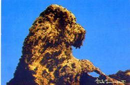 Arcipelago Maddalenino - Il Barboncino - Rocce Corrose Da Millenni - Da Venti Impetuosi - Formato Grande Non Viaggiata – - Italia