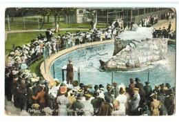 18645     Cpa   BUFFALO  Feeding The Seal At The 300 ! 1908 !    ACHAT DIRECT !! - Buffalo